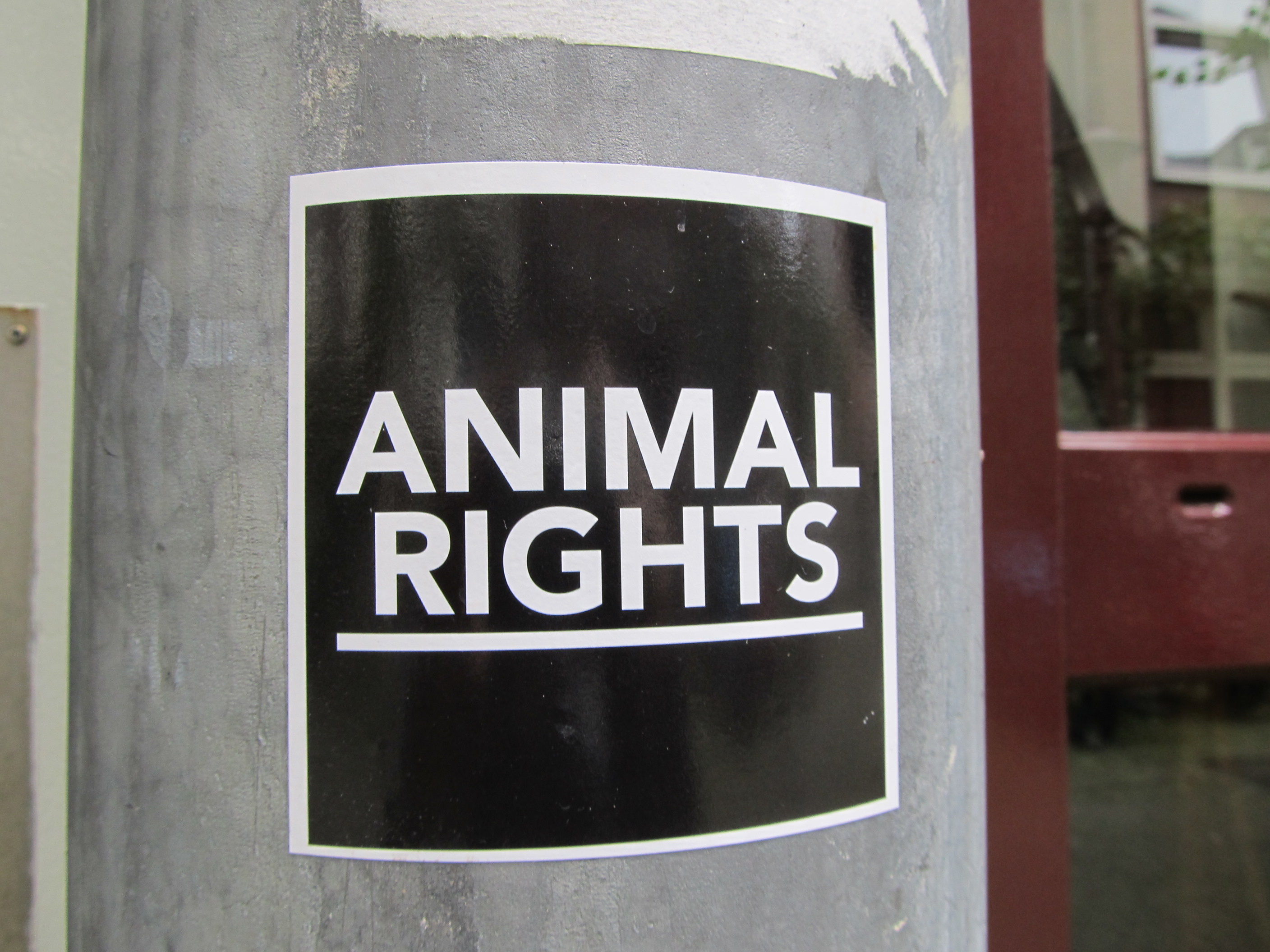 animal rights amsterdam